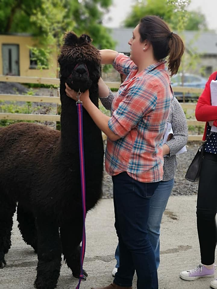 alpaca association of Ireland vet course